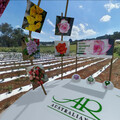 Take a tour of Australian Roses in VR