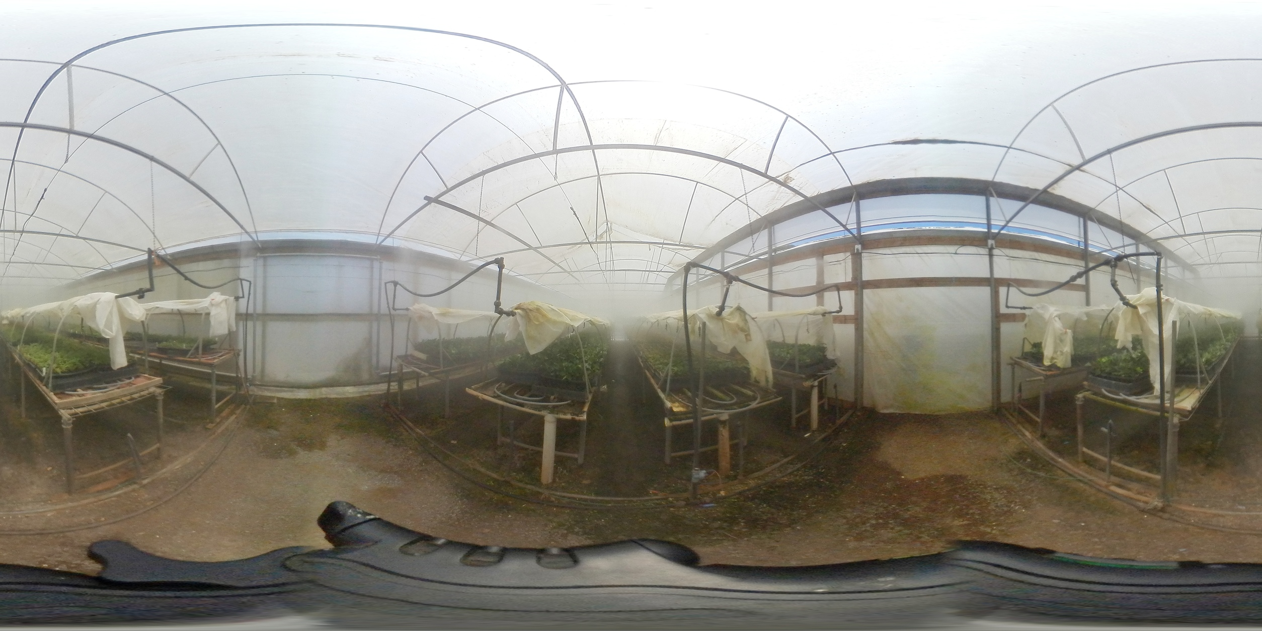 A misty greenhouse with seedlings